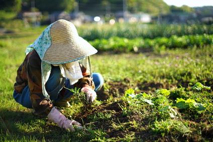 農作業・畑仕事